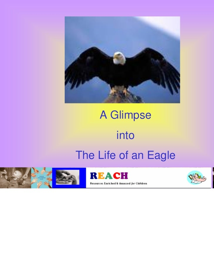 A Glimpse        intoThe Life of an Eagle