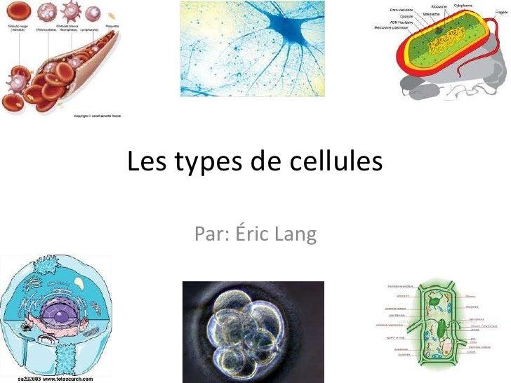 Les types de cellules <br />Par: ÉricLang <br />