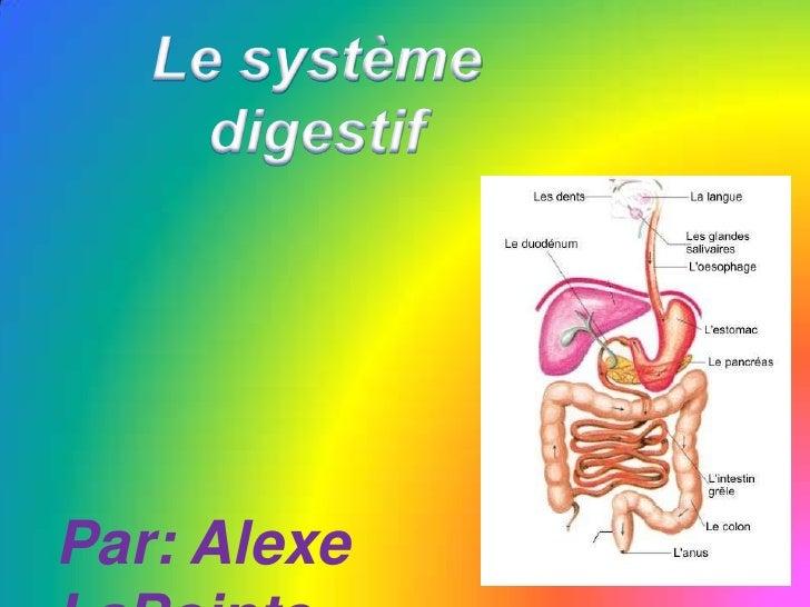 Le système<br />digestif<br />Par: AlexeLaPointe<br />