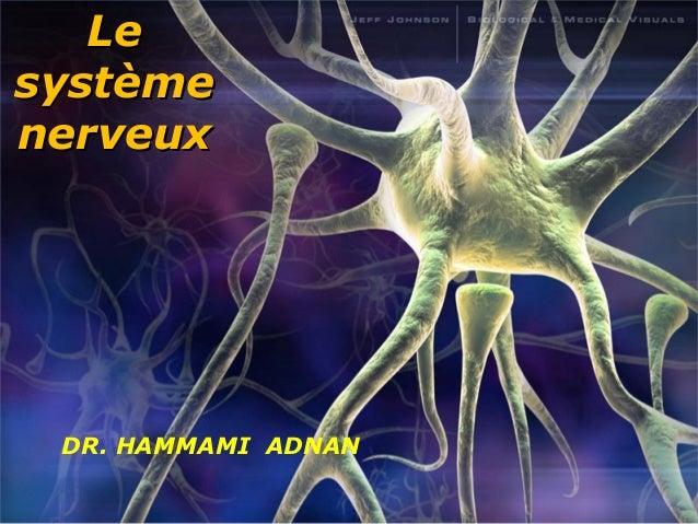 LLee  ssyyssttèèmmee  nneerrvveeuuxx  DR. HAMMAMI ADNAN