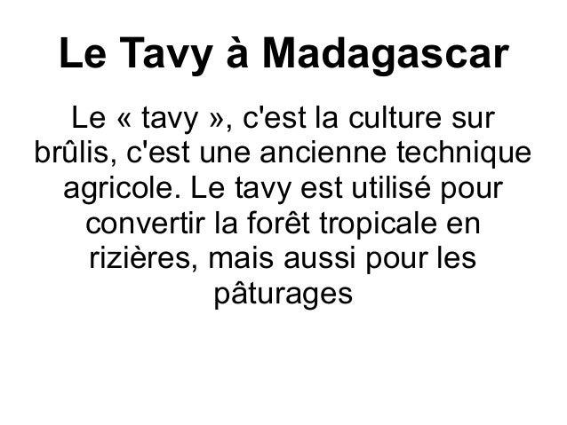 Le Tavy à Madagascar Le « tavy », c'est la culture sur brûlis, c'est une ancienne technique agricole. Le tavy est utilisé ...