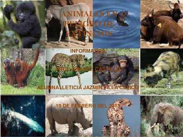 ANIMALES EN         PELIGRO DE         EXTINCION           INFORMATICA      PROF. ANAYELI CASTILLOALUMNA: LETICIA JAZMIN V...
