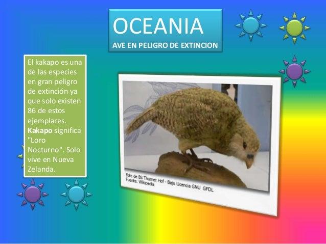 OCEANIA                   AVE EN PELIGRO DE EXTINCIONEl kakapo es unade las especiesen gran peligrode extinción yaque solo...