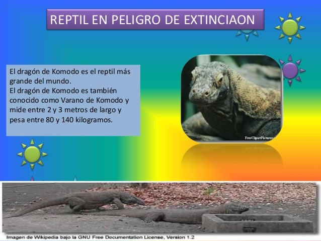 REPTIL EN PELIGRO DE EXTINCIAONEl dragón de Komodo es el reptil másgrande del mundo.El dragón de Komodo es tambiénconocido...