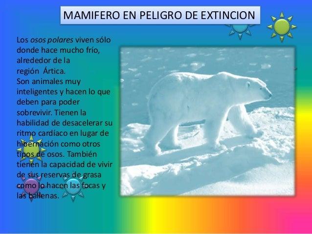 MAMIFERO EN PELIGRO DE EXTINCIONLos osos polares viven sólodonde hace mucho frío,alrededor de laregión Ártica.Son animales...