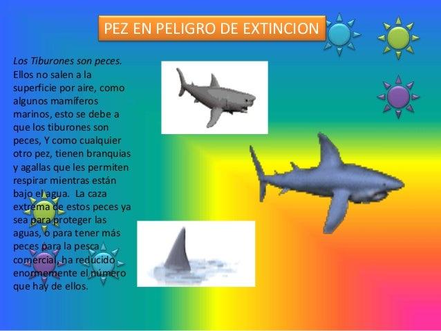 PEZ EN PELIGRO DE EXTINCIONLos Tiburones son peces.Ellos no salen a lasuperficie por aire, comoalgunos mamíferosmarinos, e...
