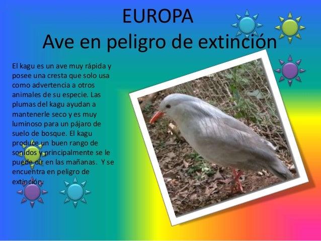 EUROPA        Ave en peligro de extinciónEl kagu es un ave muy rápida yposee una cresta que solo usacomo advertencia a otr...