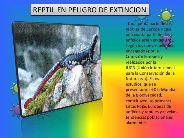 REPTIL EN PELIGRO DE EXTINCION                         Una quinta parte de los                        reptiles de Europa y...