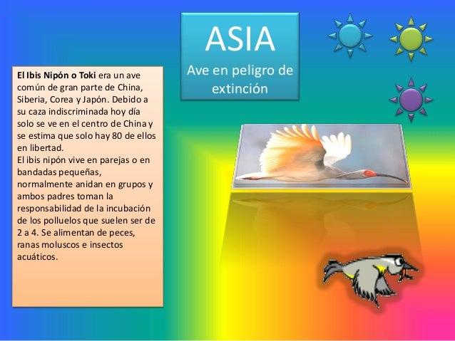 ASIAEl Ibis Nipón o Toki era un ave      Ave en peligro decomún de gran parte de China,            extinciónSiberia, Corea...