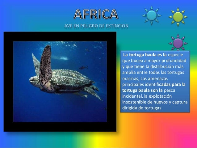 La tortuga baula es la especieque bucea a mayor profundidady que tiene la distribución másamplia entre todas las tortugasm...