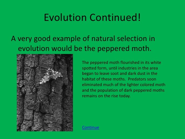 Explain How The Process Of Natural Selection Works
