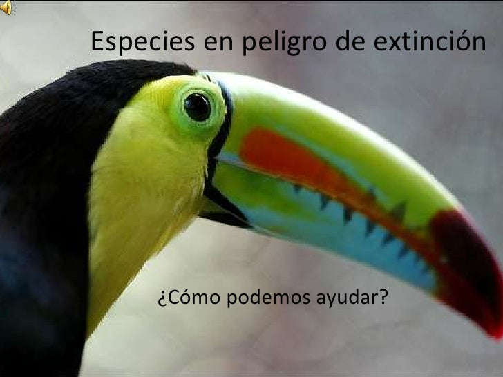 Especies en peligro de extinción     ¿Cómo podemos ayudar?