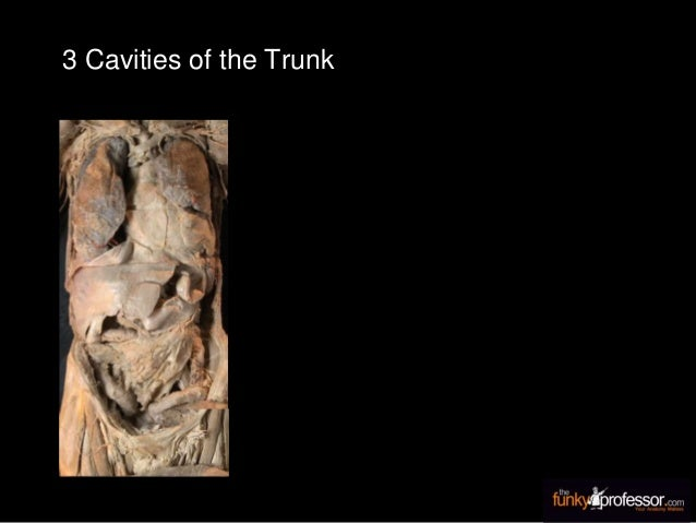 3 Cavities of the Trunk