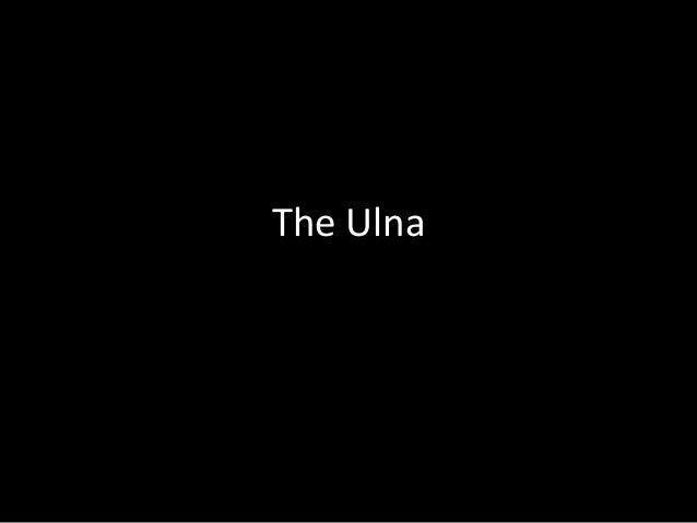 The Ulna