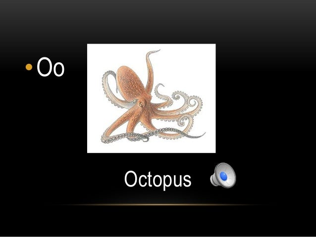 •Oo      Octopus