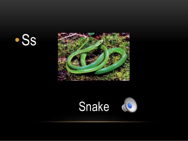 •Ss      Snake