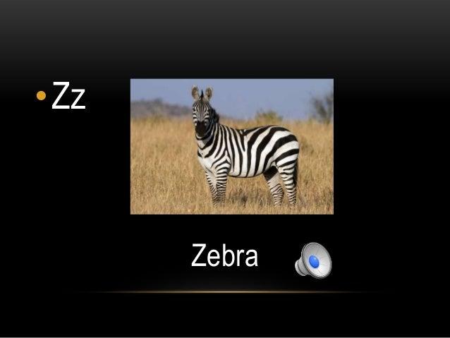 •Zz      Zebra