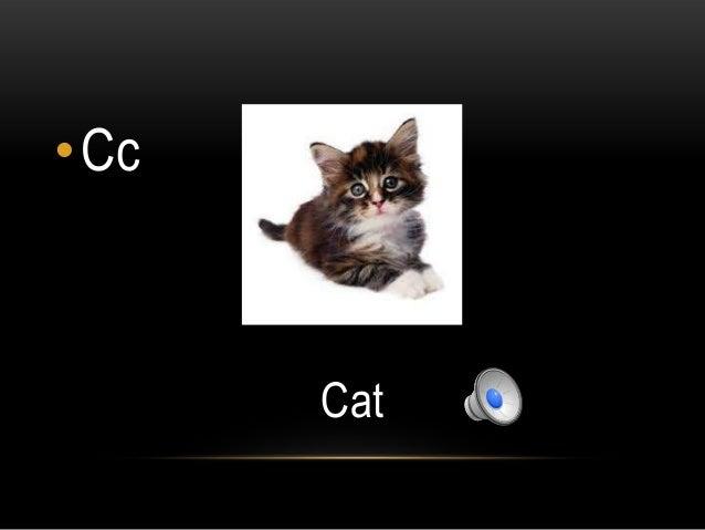 •Cc      Cat