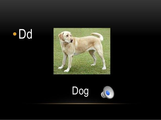 •Dd      Dog