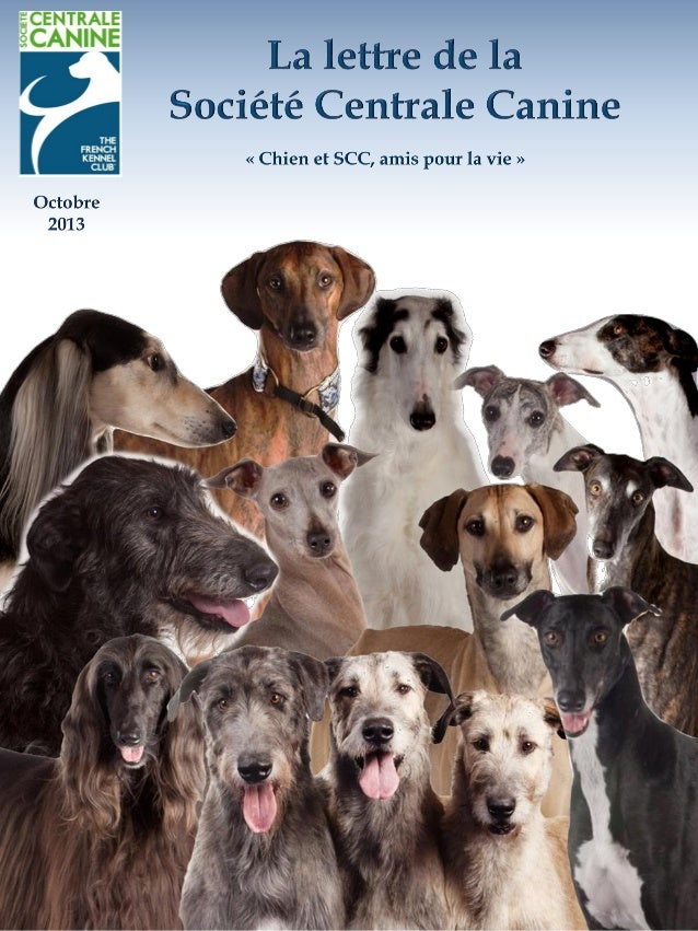Le chien, Morphologie, Esthétique, Jugement Cet ouvrage est la nouvelle référence du monde du chien, collaboration de 12 g...