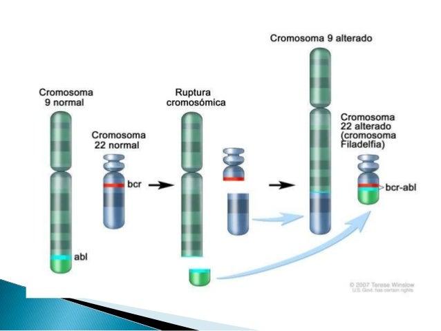  De soporte : quimioterapia  Imatinib inhibidor de tirosin quinasa abl-bcr  Transplante alogénico de progenitores hemat...