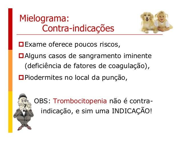 Exame mielograma