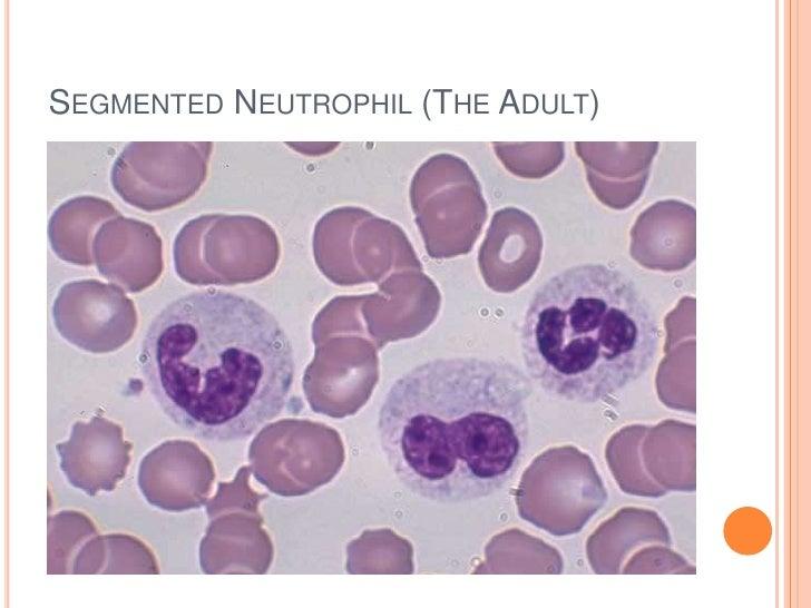 Leukocytes slides