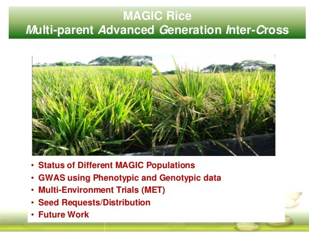 MAGIC Rice Multi-parent Advanced Generation Inter-Cross • Status of Different MAGIC Populations • GWAS using Phenotypic an...