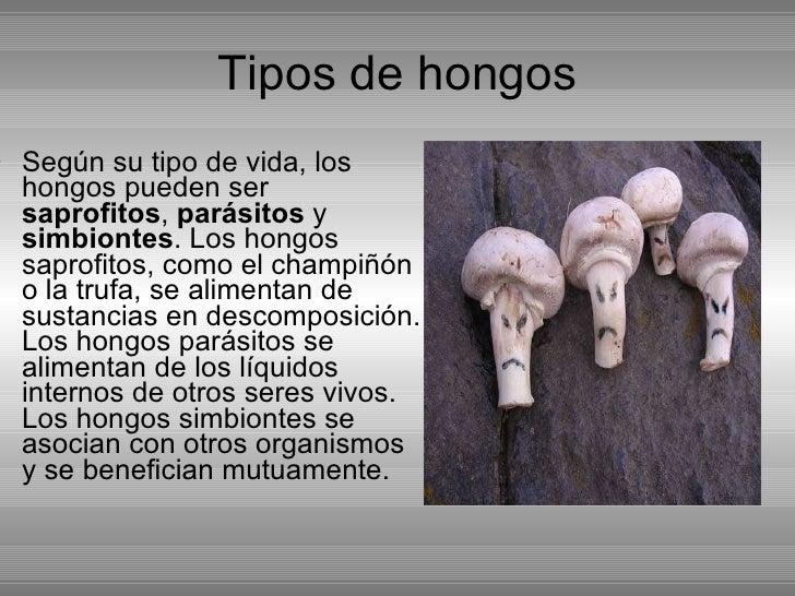 Powerpoint lvaro y ra l levaduras y hongos - Como limpiar hongos de la pared ...