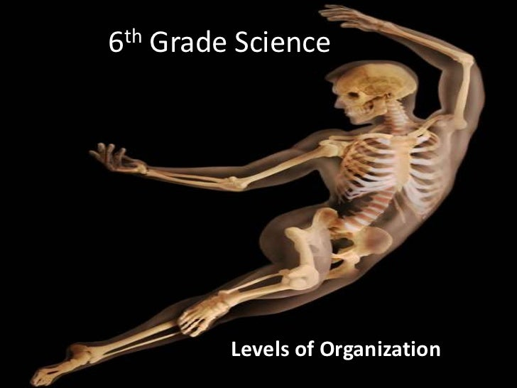 6th Grade Science<br />Levels of Organization<br />