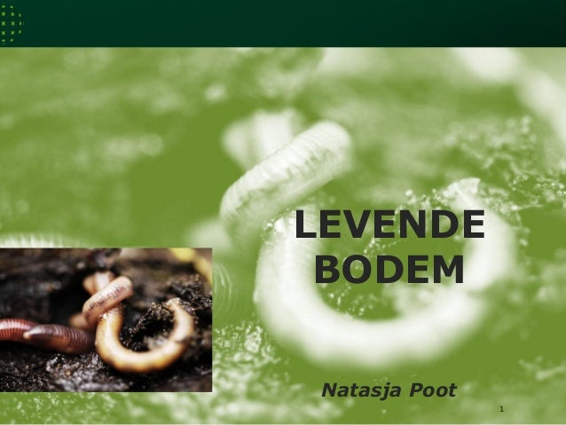 LEVENDE BODEM 1 Natasja Poot