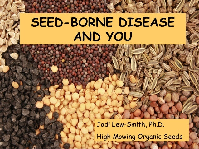 SEED-BORNE DISEASE AND YOU  Jodi Lew-Smith, Ph.D. High Mowing Organic Seeds