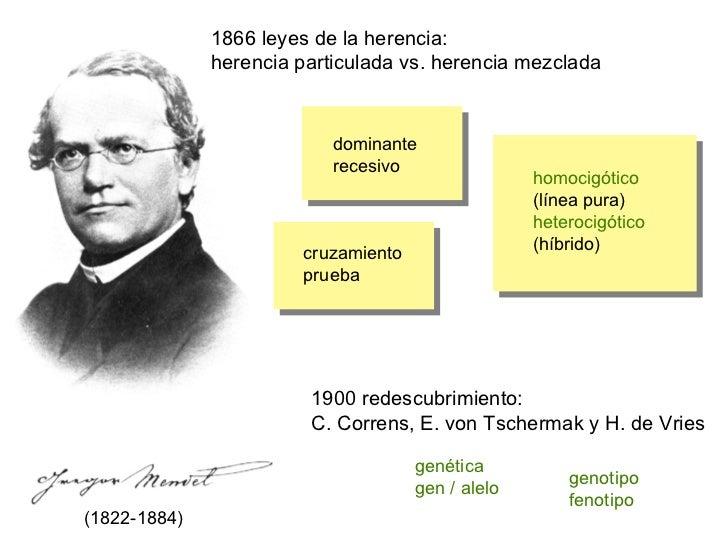 1866 leyes de la herencia: herencia particulada vs. herencia mezclada homocigótico (línea pura) heterocigótico (híbrido) d...