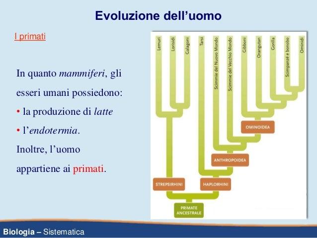 Biologia – Sistematica Evoluzione dell'uomo In quanto mammiferi, gli esseri umani possiedono: • la produzione di latte • l...