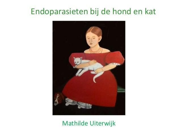 Endoparasieten bij de hond en kat        Mathilde Uiterwijk