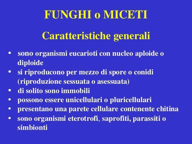 FUNGHI o MICETI Caratteristiche generali • sono organismi eucarioti con nucleo aploide o diploide • si riproducono per mez...