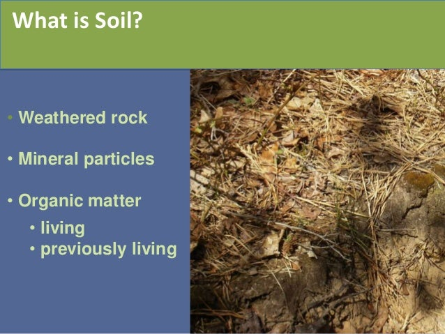 Landscape for life and the role of soil in the sustainable for Is soil living