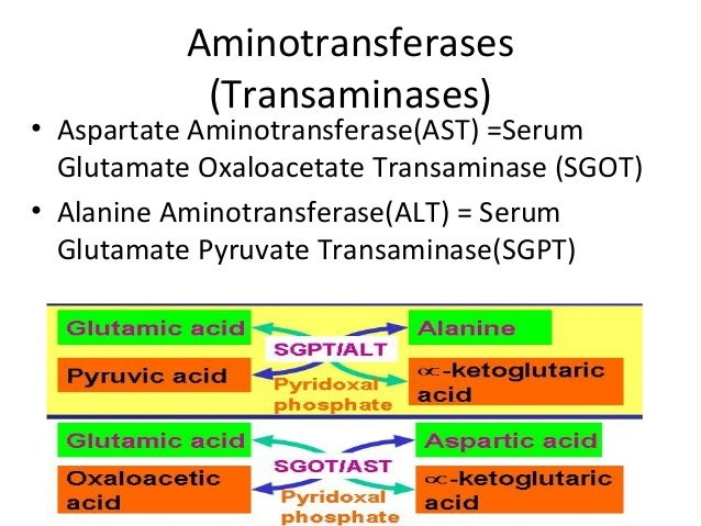 Aminotransferases (Transaminases) • Aspartate Aminotransferase(AST) =Serum Glutamate Oxaloacetate Transaminase (SGOT) • Al...