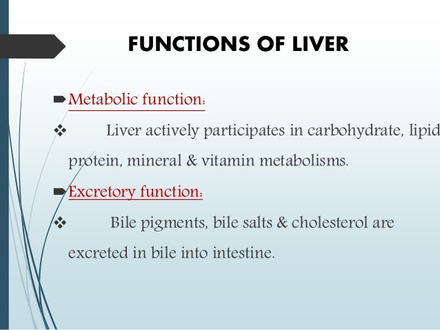 the anatomy and the role of liver The human digestive system - interactive anatomy images teach you all about the stomach, liver, gallbladder, appendix and the other digestive system organs.