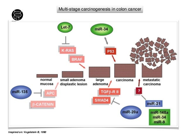 Genes and mechanisms in colorectal cancer crc