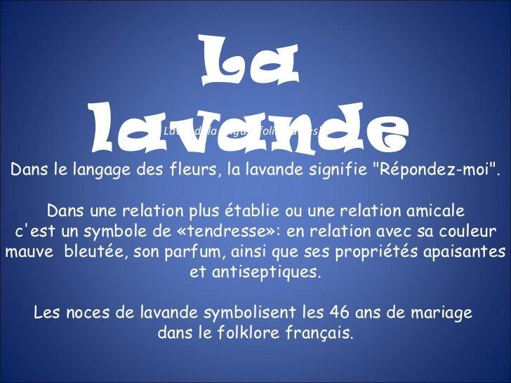 """La lavande Lavandula angustifolia (labiés) Dans le langage des fleurs, la lavande signifie """"Répondez-moi"""". Dans ..."""