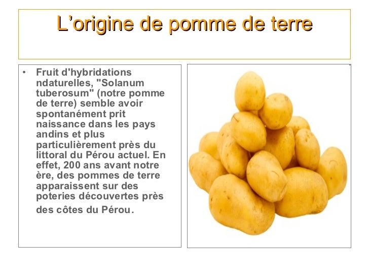 L 39 histoire des fruits et des l gumes - Pomme de terre germee comestible ...