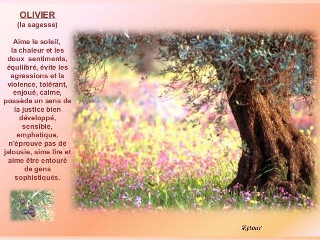 OLIVIER    (la sagesse)    Aime le soleil,   la chaleur et les doux sentiments, équilibré, évite les   agressions et la vi...