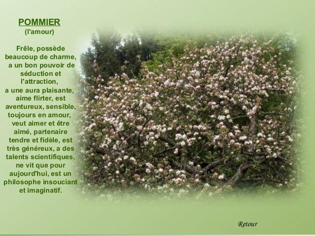 POMMIER      (lamour)      Frêle, possèdebeaucoup de charme,  a un bon pouvoir de       séduction et        lattraction,a ...