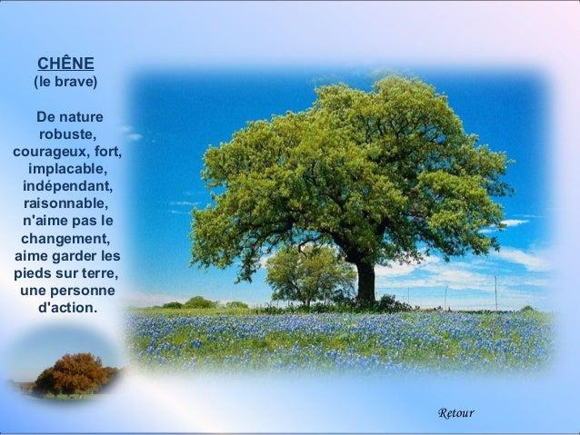 CHÊNE   (le brave)   De nature    robuste,courageux, fort,  implacable, indépendant, raisonnable, naime pas le changement,...