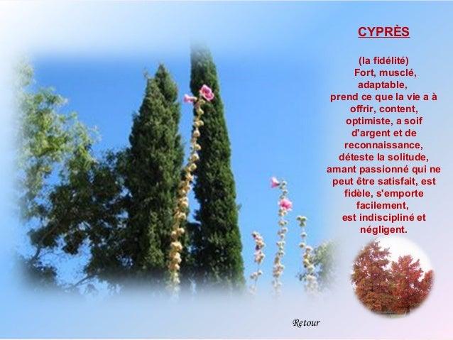 CYPRÈS                 (la fidélité)                Fort, musclé,                 adaptable,          prend ce que la vie ...
