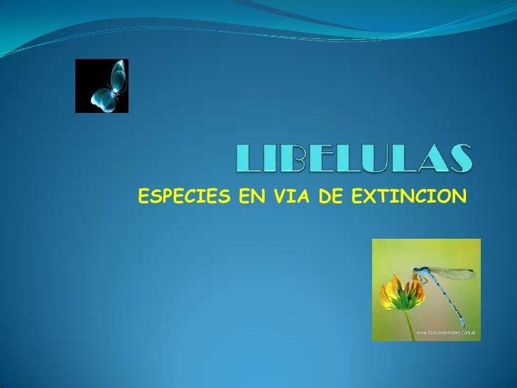 LIBELULAS<br />ESPECIES EN VIA DE EXTINCION<br />