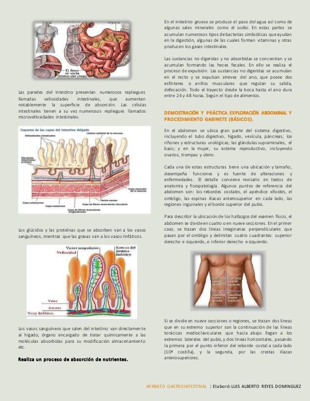 Aparato gastrointestinal. (Fisiología) Luis alberto Reyes Dominguez.