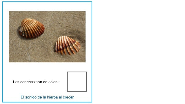 Las conchas son de color…
