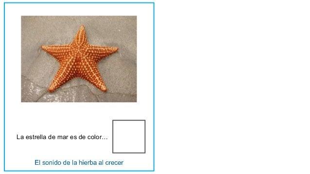 La estrella de mar es de color…